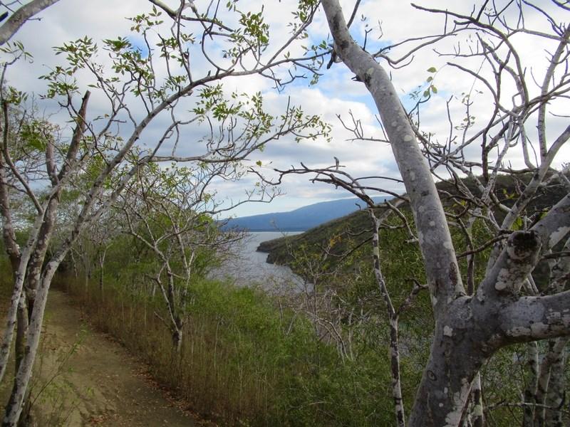 palo-santo-stromy 2