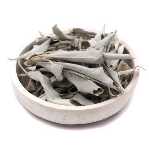 šalvia biela v nádobe