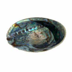 Mušľa Abalone iris