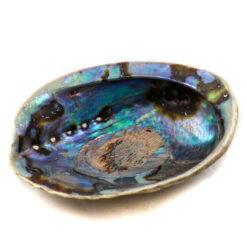 mušla na vydymovanie abalone iris